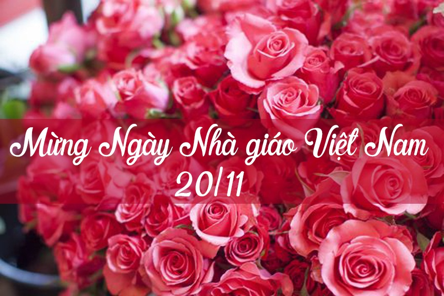 Tuyển tập những câu chúc hay mừng ngày Nhà giáo Việt Nam 20/11