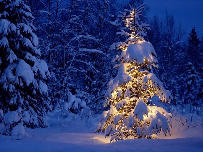 Dowload trọn bộ 50+ hình ảnh cây thông noel ấn tượng nhất